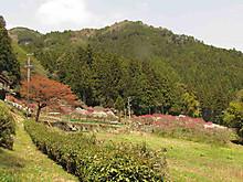 2013_04180043