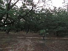 2013_11060123