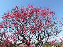 2014_0222hurawapaku0050