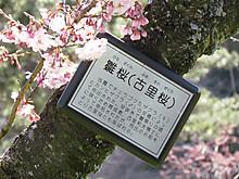 2014_0222hurawapaku0081