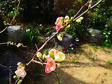 2015_03010009