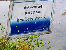 2015_03080008