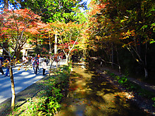 2015_11300032_2