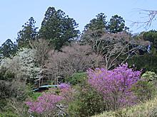 2017_04130025