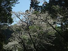 2017_04130060