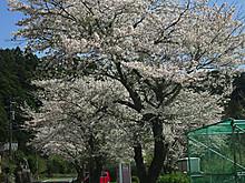 2017_04130061_2