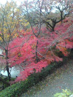 京都に来ています