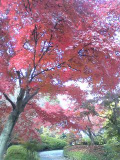 常寂光寺の紅葉